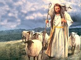 Cem ovelha. 1